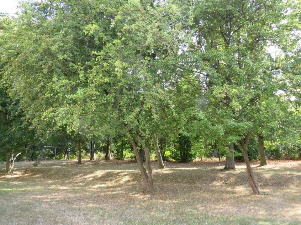Grünbereiche